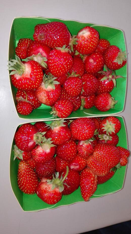 30 avril des fraises!