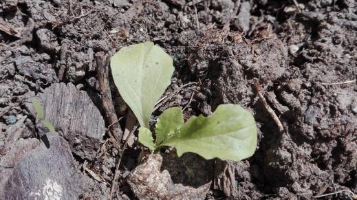 9 septembre des plantations