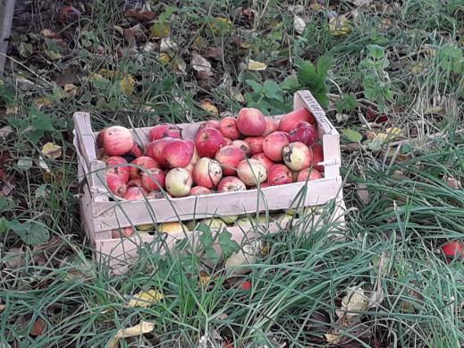 vidéo sur le jus de pomme