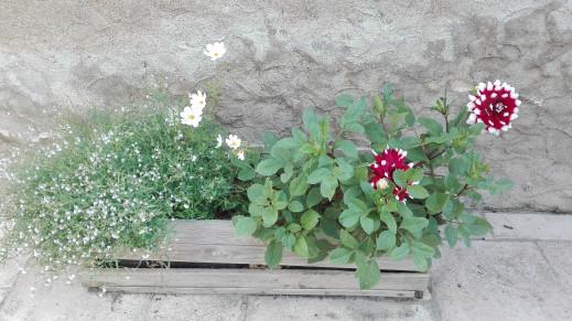 2 septembre  des jardinières !!