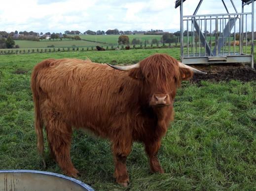 un nouvel animal sur la ferme:) !