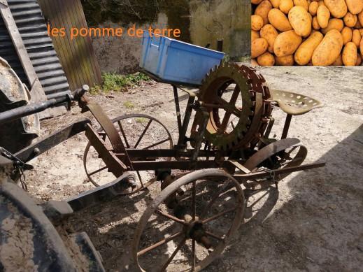 vidéo sur les pomme de terre
